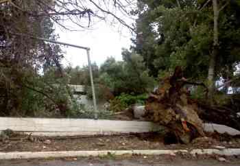 Αγιος Νικόλαος, Πλαζ ΕΟΤ, Πεσμένο δένδρο & καταστροφή περίφραξης - 200905051042