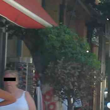 Αγιος Νικόλαος, Δένδρο έξω από καφετέρεια οικογένειας Γιαννικάκη - 200908031457