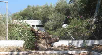 Αγιος Νικόλαος, Πλαζ ΕΟΤ, Πεσμένο δένδρο & καταστροφή περίφραξης - 200908091501