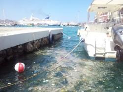 ΝΕΑ ΚΡΗΤΗ, Αγιος Νικόλαος, Λιμάνι, σκουπίδια - CACHE_620X620_1_1063318